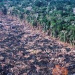 Amazon forest cleared by burning